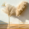 real pampas grass decor natural dried flowers plants wedding flowers dry flower bouquet fluffy lovely for holiday home decor preview-1