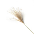 real pampas grass decor natural dried flowers plants wedding flowers dry flower bouquet fluffy lovely for holiday home decor preview-6