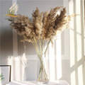real pampas grass decor natural dried flowers plants wedding flowers dry flower bouquet fluffy lovely for holiday home decor preview-4