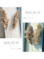 real pampas grass decor natural dried flowers plants wedding flowers dry flower bouquet fluffy lovely for holiday home decor preview-3