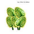 5pcs green leaf A