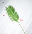 Simulation leaf No12