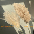 real pampas grass decor natural dried flowers plants wedding flowers dry flower bouquet fluffy lovely for holiday home decor preview-2