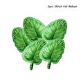5pcs green leaf B
